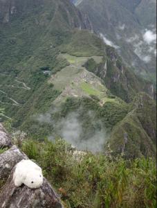 Ours Inca qui surveille son domaine ...