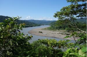 rivieremazuko